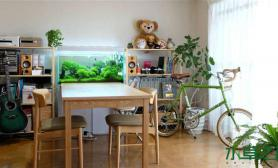 水草造景水族箱如何造景?