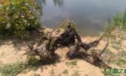 水草造景意外的收获水草缸捡到大沉木