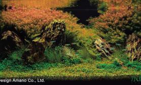 【天津龙魂国际】几年来收藏的草缸美图