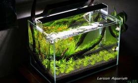 水草造景开缸18天水草缸45小缸······