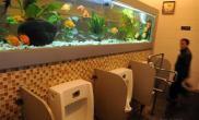 公厕热带鱼观赏墙赏心悦目边方便边欣赏(图)