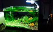 35*20*23绿色火山石造景36天交作业鱼缸水族箱