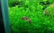 我的水族--鱼虾蟹和睦相处水草缸其乐融融