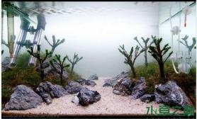 水族箱造景莫丝树为主题的水草缸
