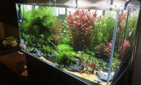 水草造景[金秋十月晒经验]入坑5个月水草缸分享一下自己的第一个缸