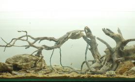 """[转贴]  """"沉木""""造景的骨架集锦  [53P]"""