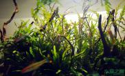 沉木与水草的极致搭配