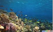 正在消逝的大堡礁(多图)