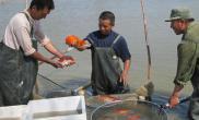 新疆兵团发展壮大观赏鱼养殖基地(图)