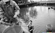"""红鱼""""搬家""""不容易花港观鱼的红鱼池要大扫除(图)"""