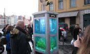 纽约街头闲置电话亭被改造成水族箱(多图)