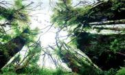水草缸造景王超作品名称《天空》青龙石120CM尺寸设计