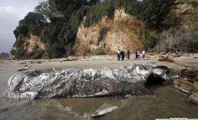 海滩惊现巨鲸腐尸(多图)