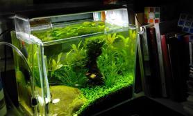 办公桌30小缸水草缸不敢称造景水草缸只为那一抹春色沉木杜鹃根青龙石水草泥