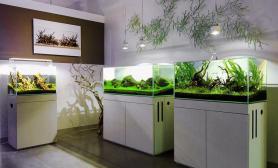 水草造景大缸120CM多个鱼缸欣赏