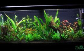 求评价水草缸求鉴定鱼缸水族箱