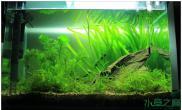 鱼缸造景活着就得不停的折腾 —— 今天水草缸你折腾了吗?