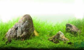 120cm水草缸打造属于你自己的水族馆