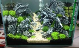 水草造景造景缸欣赏