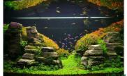 水草造景作品:水草造景(120cm)-121