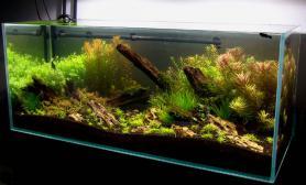 水草缸造景沉木水草泥化妆砂青龙石120CM尺寸设计24
