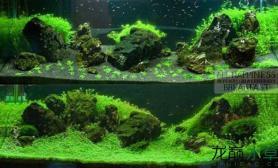 鱼缸造景200个造景教程