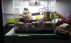 刚做了个木化石造景  大家来看看种什么阴性草