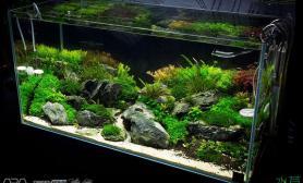 这样的石景缸水草缸够味鱼缸水族箱