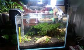 鱼缸造景今天开了一个小缸水草缸请指教