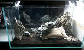 鱼缸造景来发90缸的大面膜沉木杜鹃根青龙石水草泥