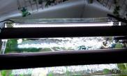 帮忙看看水草缸是不是灯的问题