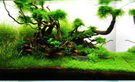 水草缸造景沉木水草泥化妆砂青龙石60CM尺寸设计66