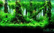【造景欣赏】水中的小森林