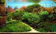 水草造景作品:水草造景(120cm)-83