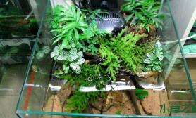 水草造景小小水陆缸