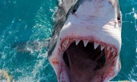 摄影师南非海域拍摄鲨鱼遭围攻(多图)