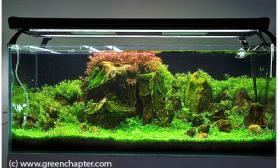 水草缸造景沉木水草泥化妆砂青龙石120CM尺寸设计38