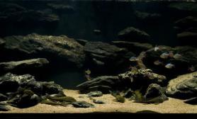 沉木青龙石原生态鱼缸08