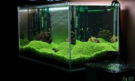 水草造景清新的60小草缸