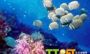 水质酸碱对观赏鱼饲养的影响