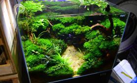 水草缸造景沉木水草泥化妆砂40方缸MOSS造景45CM及以下尺寸设计