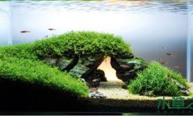 水草之巅迎新冬:水草造景之美景源于生活又高于生活