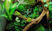 水与木浑然天成、花与草相映相成鱼缸水族箱如此绝美的一切绝对是你的菜鱼缸水族箱
