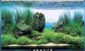 水草造景鱼缸造景石头