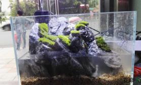 水草造景新开缸的小水陆缸