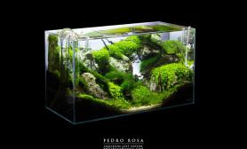 Pedro Rosa 书房 水草造景欣赏