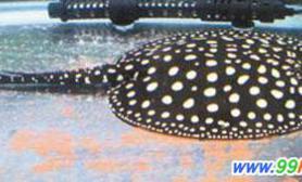 2010台湾观赏鱼博览会今开展鱼星踊跃亮相(多图)