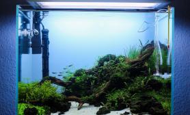 水草缸造景沉木水草泥化妆砂青龙石60CM尺寸椒草设计
