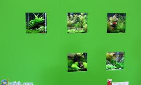 2010Interzoo展览草缸组剪影