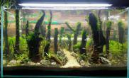 水草造景菜鸟开缸3个星期水草缸高手给点儿建议鱼缸水族箱